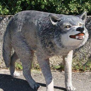 Loup montrant les dents Moulage résine et fibre de verre grandeur nature très réaliste