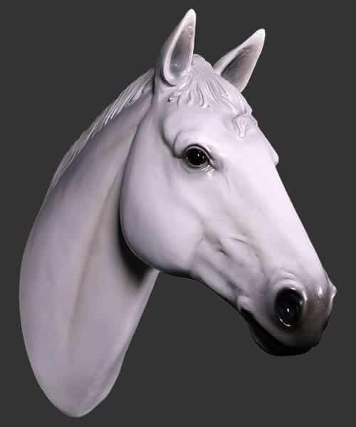 Tete De Cheval Su Acht Blanc