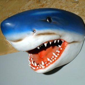 Requin Tete St 2077 Statue Grandeur Nature En Resine Et Fibre De Verre Location Vente