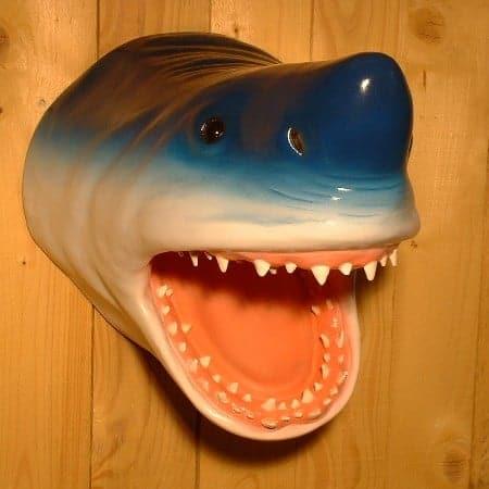 Tete Requin Squale 1