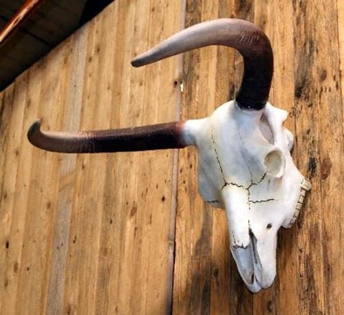 Western – Crâne de vache américaine